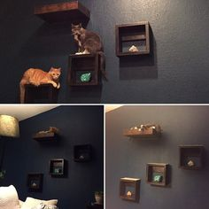 (paid link) How to create DIY Floating Cat Shelves -