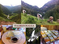 Mai visto l'#alba in #montagna?   Un emozionante spettacolo da non perdere...  Tutta la bellezza della #natura e il #gusto dei prodotti tipici locali racchiusi in una fantastica iniziativa che vi porterà alla scoperta delle #malghe del #Trentino : #ALBEINMALEGA !  Pronti per la prossima #escursione a Malga Trat in Val di Ledro ? #trentino #enogastronomia #saporitrentini #degustatrentino Trentino Slow Trek #escursionintrentino