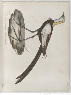 La Galerie des oiseaux : dédiée à Son Altesse Royale Madame, duchesse de Berri. Tome 2,Partie 3-4-5 / par M. L.-P. Vieillot,... et par M. P. Oudart... Auteur : Vieillot, Louis-Pierre (1748-1831) Auteur : Oudart, Paul Éditeur : Constant-Chantpie (Paris) Date d'édition : 1825 Type : monographie imprimée Langue :Français Format : 5 parties en 2 vol. in-4°, 299 pl. coloriées, 33 pl. en noir numérotées A-HH et 24 pl. coloriées Format : application/pdf Droits : domaine public Identifiant…