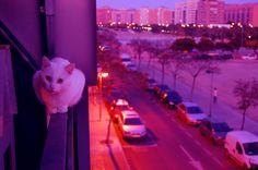 Rata : Foto