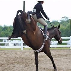 The moment when you make that split second decision whether or not to ride it out, or emergency dismount. Hahaha  www.thewarmbloodhorse.com