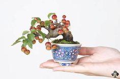 Berries on a Crabapple bonsai tree, very small size (called Shohin) by Katsumi Komiya