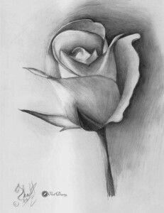 rose pencil drawing step by step – Wunderbare Kunst Pencil Art Drawings, Art Drawings Sketches, Flower Sketches, Drawing Flowers, Pencil Shading, Sketch Painting, Step By Step Drawing, Drawing Techniques, Art Tutorials