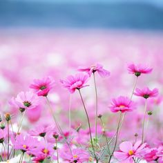 Flowers Wallpaper Widescreen HD With ID On Nature Category In Backgrounds Is One From Many Best Wallpapers