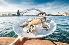 Perfect day for oysters by the Sydney Harbour Bridge Australia. So fresh! [1080x720][OC]