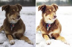 before/after - photography/editing tips for photographing pets.