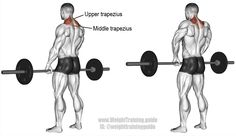 Barbell shrug. An isolation exercise. Target muscle: Upper Trapezius. Synergists: Middle Trapezius and Levator Scapulae.