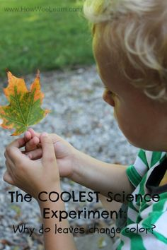 Why do leaves change color in the fall? The easiest and coolest science experiment for kids! Science Experiments For Preschoolers, Cool Science Experiments, Kids Learning Activities, Science Fair, Science Lessons, Science For Kids, Science Activities, Science Projects, Life Science