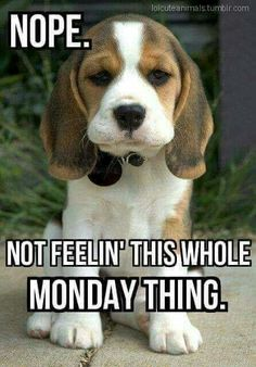 Monday puppy it's monday meme, funny monday quotes, funny weekend memes, happy monday Funny Monday Memes, Funny Quotes, Funny Memes, Jokes, Happy Monday Funny, Memes Humor, Friday Memes, Humor Quotes, Happy Monday Quotes
