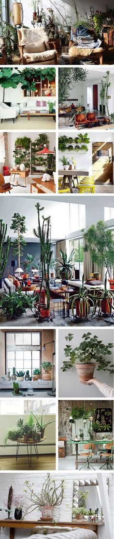 INDOOR PLANTS PONYRIDER
