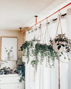 Hanging Baskets, Hanging Plants, Indoor Plants, Hoya Plants, Rare Plants, Begonia Maculata, Belle Plante, Family Wishes, Decoration Plante
