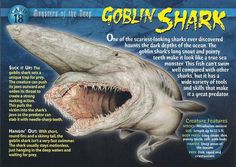 Name: Goblin Shark Category: Monsters of the Deep Card Number: 18 Front: Goblin Shark Monsters of the Deep Card 18 front Back: Goblin Shark Monsters of the Deep Card 18 back Trading Card: Myths & Monsters, Sea Monsters, Goblin Shark Facts, Types Of Sharks, Underwater Creatures, Wild Creatures, Prehistoric Creatures, Marine Biology, Animal Facts