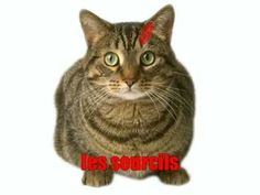 Learn French - le chat