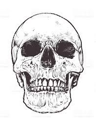 Image result for skull with mohawk vector
