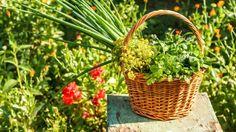 Artesanato Casa e Dicas: 15 plantas que ajudam no controle de pragas na hor...