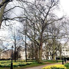 I have a thing for trees in London! #greenpark #london #britain #uk #bachelorettetrip by giovagiova