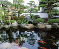 would love to have a pond in my garden someday