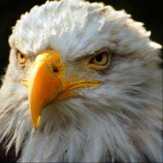 Voe como águia...