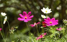 трава, фото, обои, макро, цветы, красивые картинки