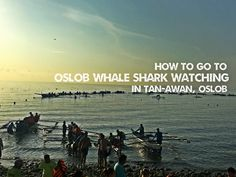 How to go to Oslob Whale Shark Watching in Tan-awan Oslob Cebu Shark Watches, To Go, How To Get, Cebu, Whale, Women's Side Tattoos, Whales, Cebu City, Men's Fitness Tips
