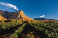 We love Colorado's wine country! (and Mount Garfield!)