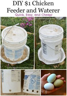 DIY chicken water and feeder from 5-gallon buckets Only $1 EACH!! The ones at the feed store this size are 50-60 dollars!