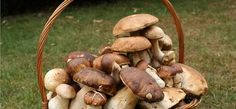 Funghi e tartufi: arriva l'etichetta obbligatoria | Made Italia