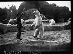 Guardian giving food to a polar bear | Agence de presse Mondial Photo-Presse. Agence photographique | 1932 | National Library of France | Public Domain