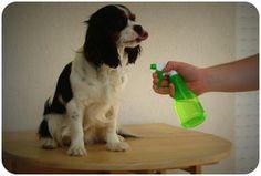 Recette de répulsif anti-puces, anti tiques pour chien (huiles essentielles) Moka, Terriers, Cavalier King Charles, Diy Stuffed Animals, Pet Health, Maine Coon, Scottie, All Dogs, Border Collie