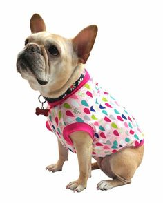 Pink Raindrops - Girl Dog Tshirt for French Bulldogs - Frenchie Fit French Bulldog Blue, French Bulldogs, American Bulldogs, Boxer Dogs, Boxers, Dog Halloween, Girl And Dog, Dogs And Puppies, Doggies