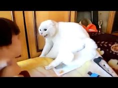 TRY NOT TO LAUGH OR GRIN - Funny Cat Fails Compilation 2016 - http://positivelifemagazine.com/try-not-to-laugh-or-grin-funny-cat-fails-compilation-2016-19/ http://img.youtube.com/vi/2KAuk_Rm72E/0.jpg  Funny cats compilation 2016 Best funny cat videos ever by Funny Vines.Hope you like a new funny cat videos compilation 2016.These funny cats and silly cats … ***Get your free domain and free site builder*** Click to Surprise me! Please follow and like us:  var addthis