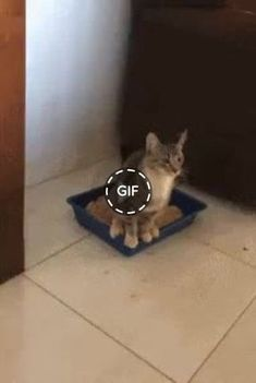 My cat immediately did not notice what happened