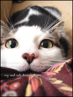 523 by ~evy-and-cats on deviantART
