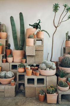 Cactus Store in Echo Park, LA - Haarkon in California. - Cactus - Cactus Store in Echo Park, LA – Haarkon in California. Best Picture For cactus For Your Taste Y -