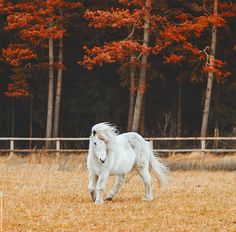 The wind of heaven is that which blows between a horse's ears. | Flickr - Photo Sharing!