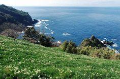 越前海岸の水仙 - カメラと共に - Yahoo!ブログ
