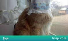 Random Funny Pictures - 35 Pics #cat #winter #funny #lol #diapers #laughing #winter is coming #dan you got new legs