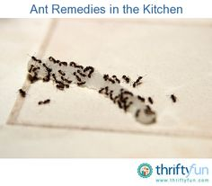 This is a guide about get rid of ants in your kitchen.  Have ants taken up residence in your home? The kitchen can be a challenging place to get rid of ants since there are so many sources of food.