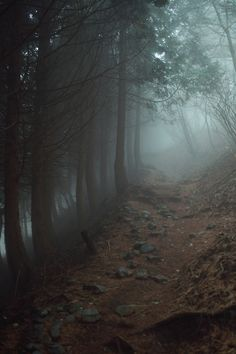 Foggy path in woods.