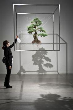 Feel-Spirit-l'Esprit de Phil.[Bonsaï]: Makoto Azuma expose (Des bonsaï morts) en Belgique