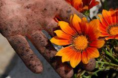 How To Make Gardener's Hand Scrub - The Aromahead Blog