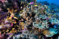 Our beautiful coral reefs!