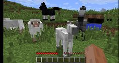 EVERYBODY WANTS TO BE A sheep ^-^