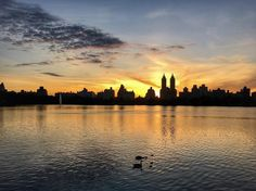 Sunset and baby ducks #reservoir #centralpark #nyc #nature #photooftheday #photography #photo