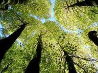 picture seen from laying on the grass looking up through the trees - Google Search