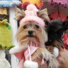 Knitted+dog+beanies+:). Keep+your+furry+pals+head+warm+this+winter+<3+Available+in+Pink,+Blue,+&+Red.+See+last+photo+on+how+to+measure+your+doggies+head.+Limited+quantities+available.  Please+allow+1+week+for+delivery.+:)