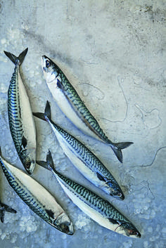 January's star: Mackerel http://bit.ly/mackerel_recipes I just bought fresh Mackerel from the fish monger. It is such a luxury to be able to buy fresh fish. That's what I love about Cornwall!