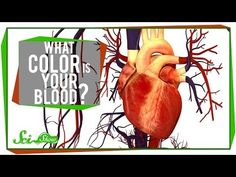 ▶ What Color is Your Blood? - YouTube. I just want to cry with joy... finally a great video clip to explain that human blood is NEVER, EVER blue in color.