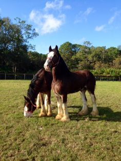 It's the Year of the Horse — What Better Time to Share News From the Tri-Circle-D-Ranch at the Walt Disney World Resort