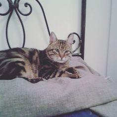 #buongiorno dal #gatto #goodmorning #cat #mummi #love #amore #micio #friend